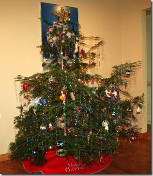 home-grown Christmas tree