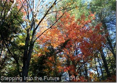 fall foliage 2016-2