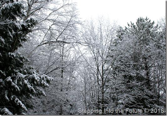snow on trees November