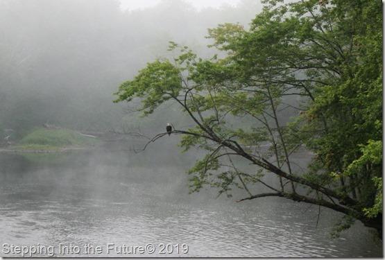 misty morning eagle