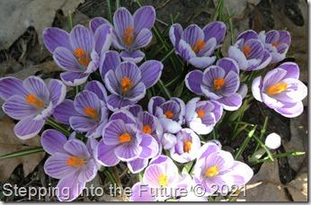 pickwick flowers 2021